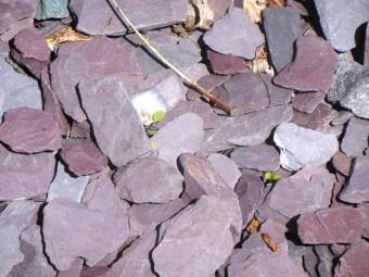 gra-005-paillette-dardoise-violette